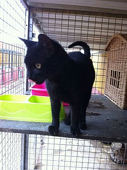 Canis - Sam (gedeeltelijke adoptie) Csm_ca12