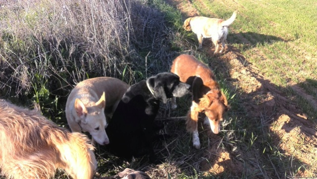 De honden van Palili E0c6ae10