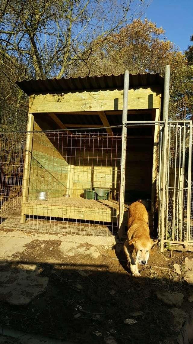 50% actie - Nieuwe kennels voor de honden van Masquechuchos Fd543212