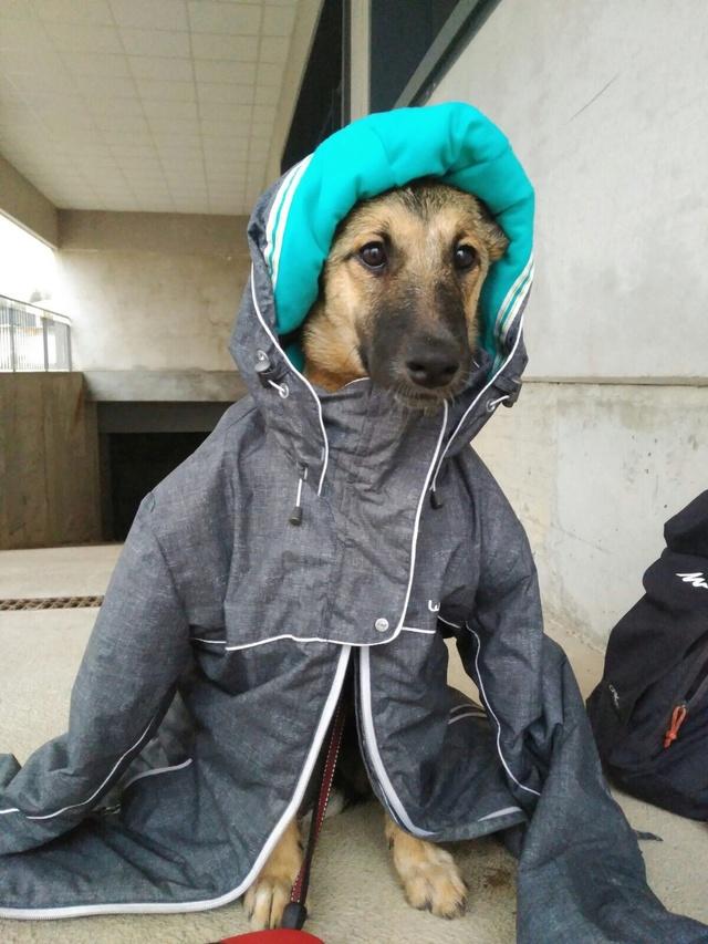 GEADOPTEERD   pup Tokyo met gebroken kaak. Image118