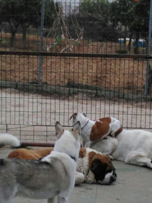 Opbouwen nieuw verblijf honden Palili Img_5919