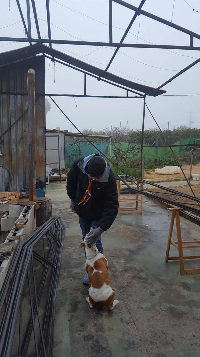 Opbouwen nieuw verblijf honden Palili Img_5920