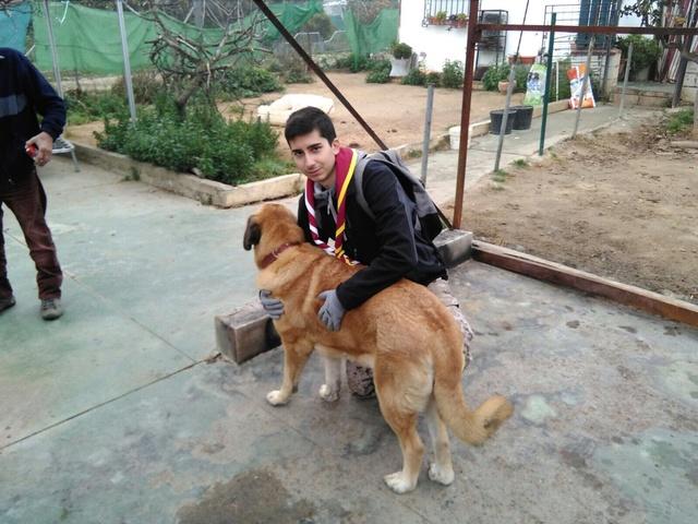 Opbouwen nieuw verblijf honden Palili Img_5922