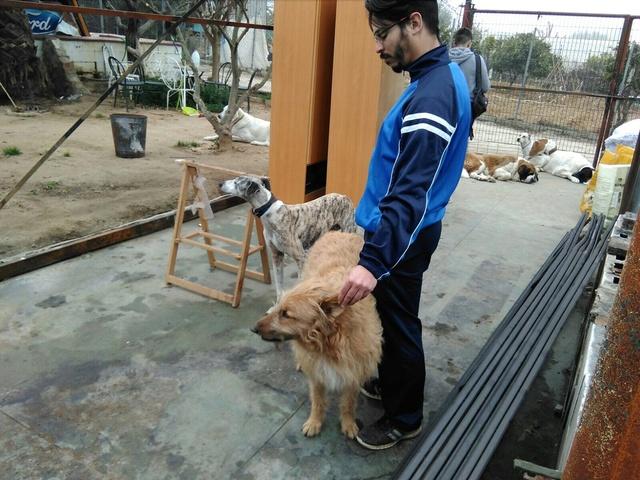 Opbouwen nieuw verblijf honden Palili Img_5923