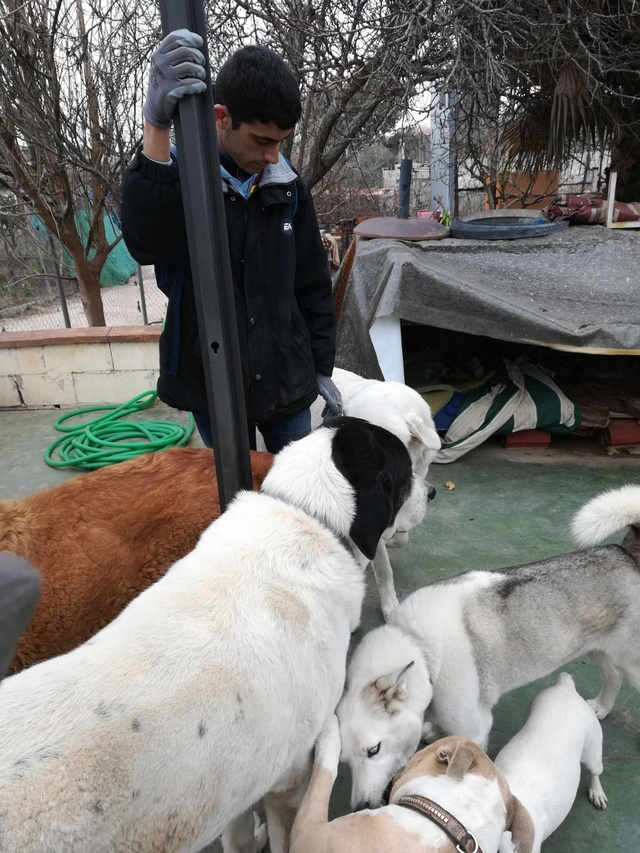 Opbouwen nieuw verblijf honden Palili Img_5924