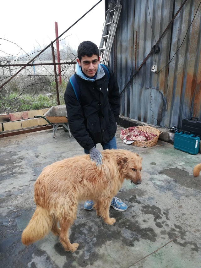Opbouwen nieuw verblijf honden Palili Img_6014