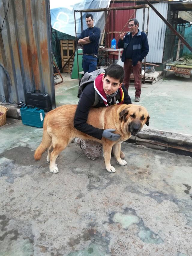 Opbouwen nieuw verblijf honden Palili Img_6015