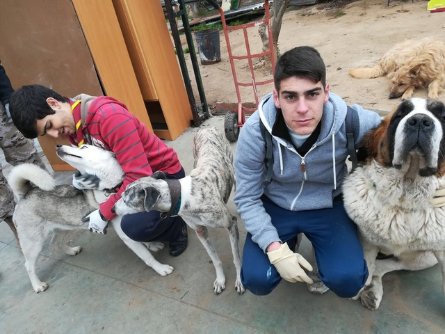 Opbouwen nieuw verblijf honden Palili Img_6018