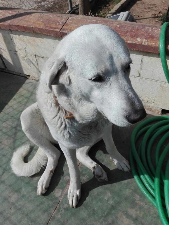 Opbouwen nieuw verblijf honden Palili Img_6024