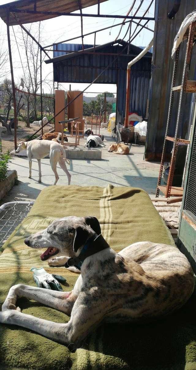 Opbouwen nieuw verblijf honden Palili Img_6026