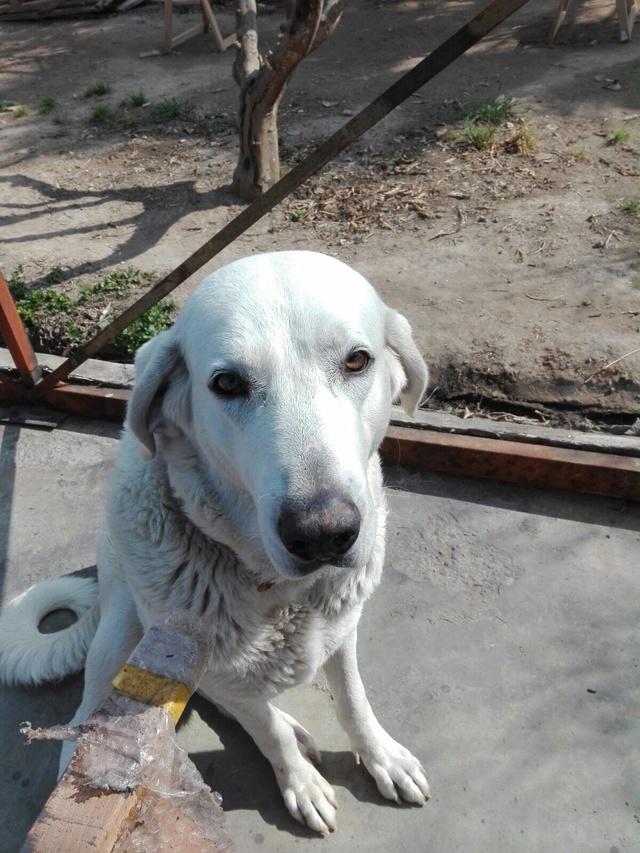 Opbouwen nieuw verblijf honden Palili Img_6028