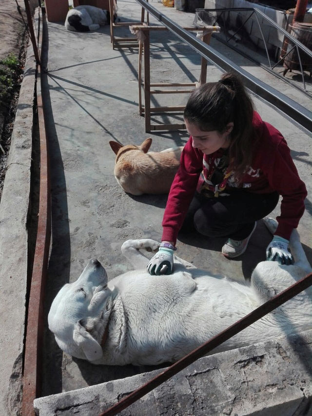 Opbouwen nieuw verblijf honden Palili Img_6030