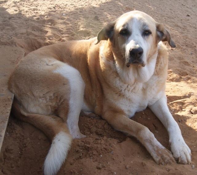 Canis Thor(Gedeeltelijke adoptie) Thor_310