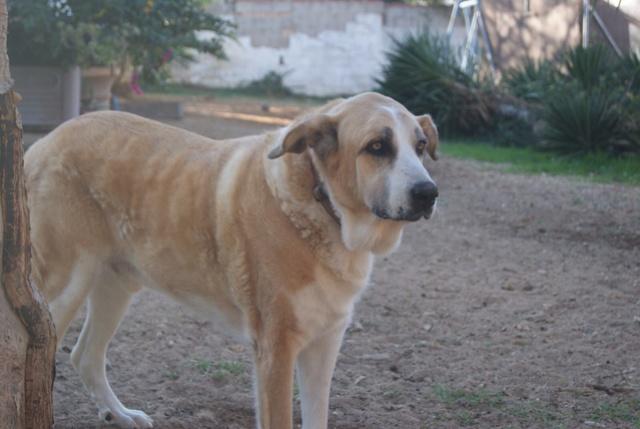 Canis Thor(Gedeeltelijke adoptie) Thor_311