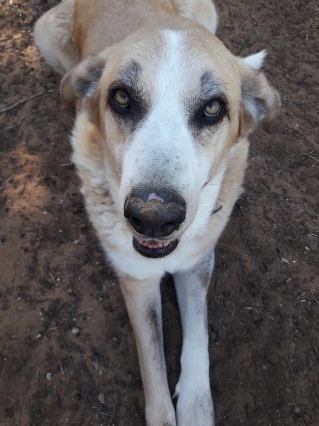 Canis Thor(Gedeeltelijke adoptie) Thor_710