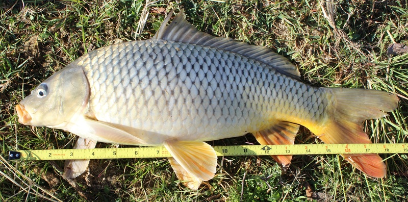 Fishing Report - Lake Chapala Carp_e10