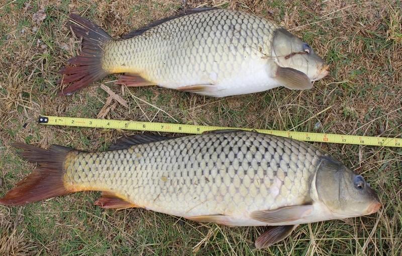 Fishing Report - Lake Chapala Img_6510