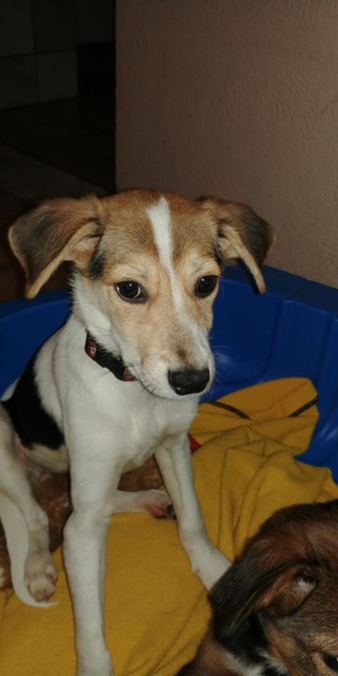 Transfert de 12 + 3 chiens de la fourrière de Piatra Neamt vers Bucarest pour le refuge d'Ellen 22491910