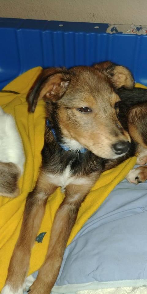 Transfert de 12 + 3 chiens de la fourrière de Piatra Neamt vers Bucarest pour le refuge d'Ellen 22540210