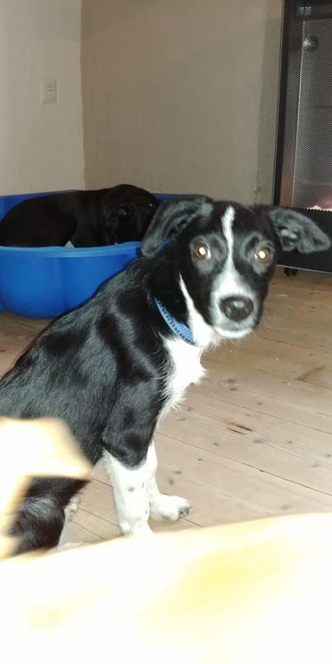 Transfert de 12 + 3 chiens de la fourrière de Piatra Neamt vers Bucarest pour le refuge d'Ellen 22552210