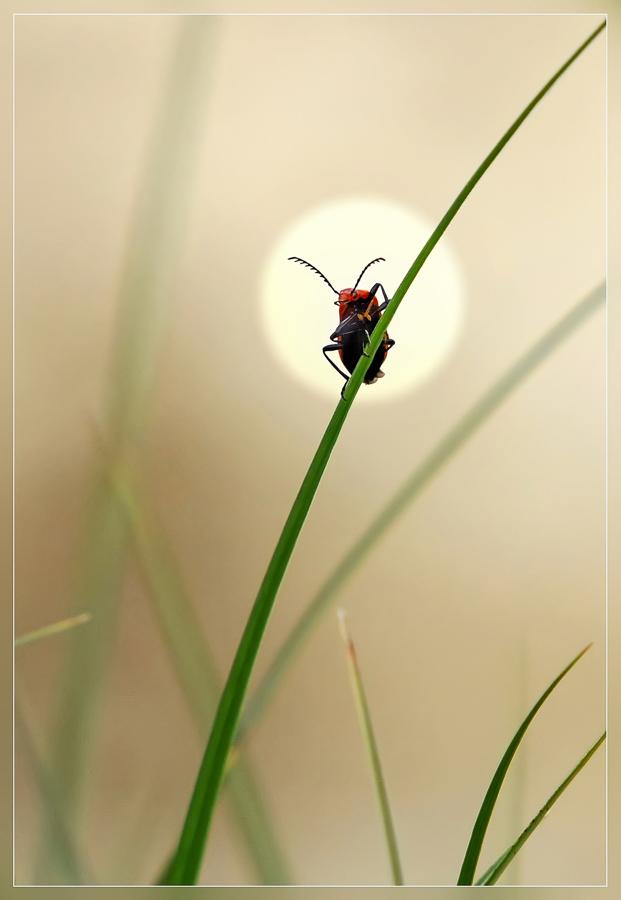 Étrennes. Semaine 25/12/2017 au 31/12/2017 Insect10