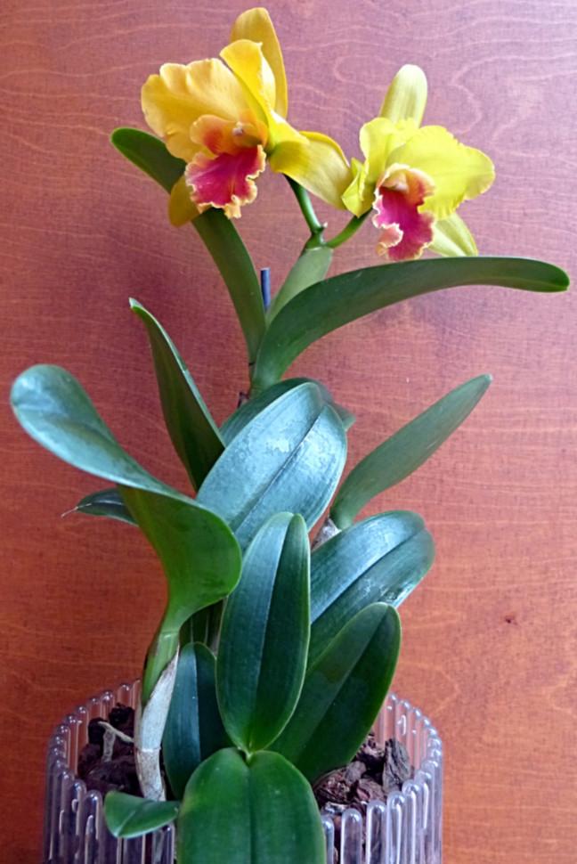 Orchideen-Neuzugang 2 - Seite 13 Obi_ca10