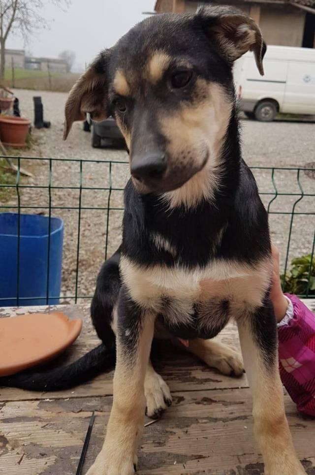 Bildertagebuch - Rex wünscht sich auch eine Familie - ÜBER EINE ORGA VERMITTELT - Hund1_10