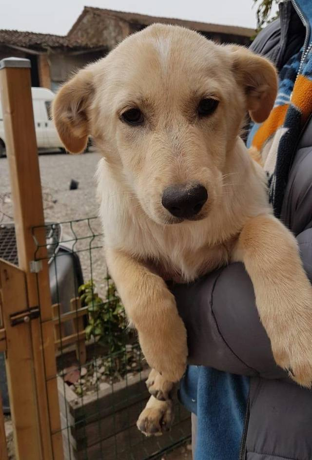 Bildertagebuch - Nello ist Nr 7 und will auch eine eigene Familie - ÜBER EINE ANDERE ORGA VERMITTELT - Hund1_12