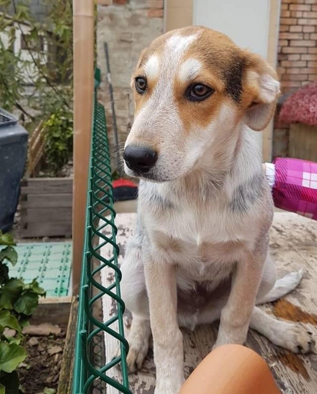 Bildertagebuch - hooopplaa hier kommt MINO - ÜBER EINE ANDERE ORGA VERMITTELT - Hund1_13