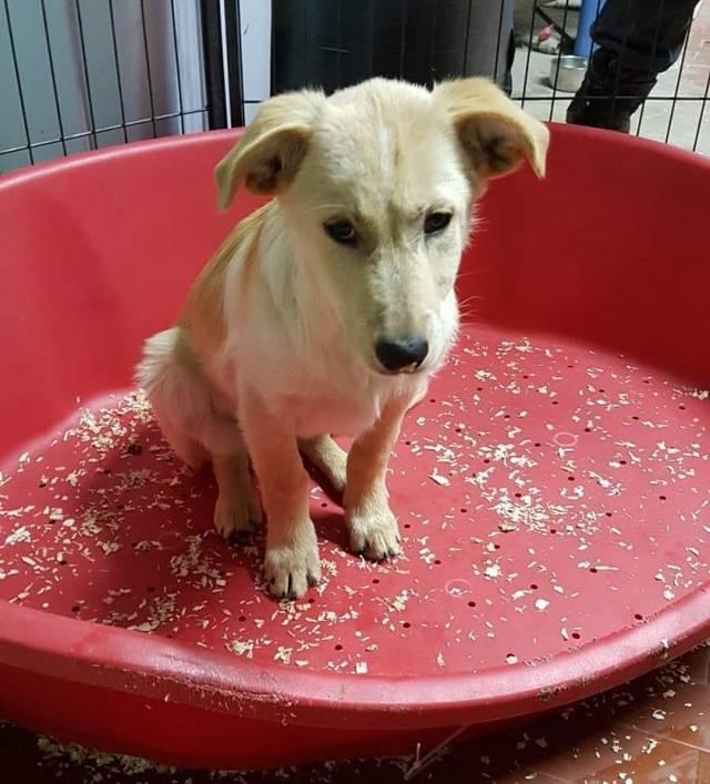 Bildertagebuch - Nello ist Nr 7 und will auch eine eigene Familie - ÜBER EINE ANDERE ORGA VERMITTELT - Hund2_10