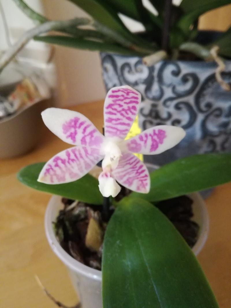 Orchideen-Neuzugang 2 Img_2020