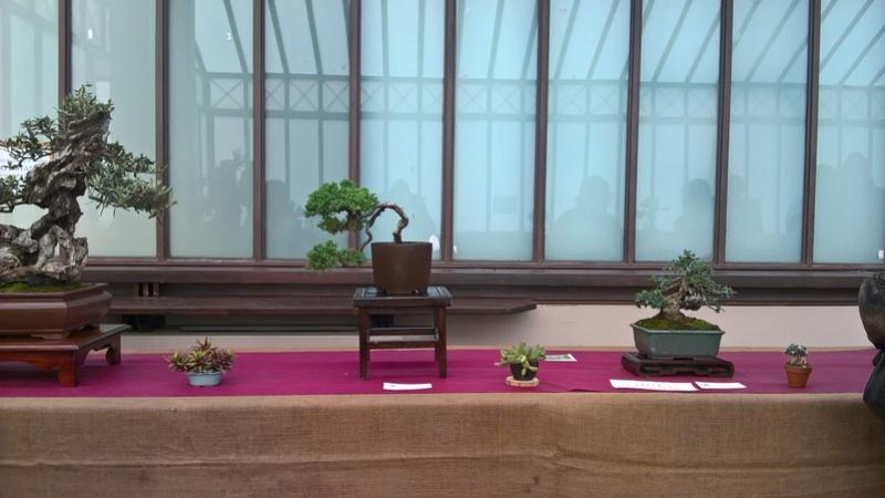 """Esposizione bonsai Club Palermo alla mostra """"Zagara di Primavera"""" Wp_20122"""