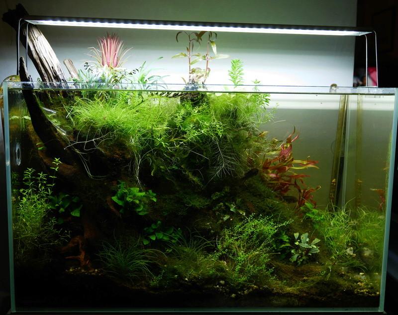 Montrez vos Aquariums P1000412