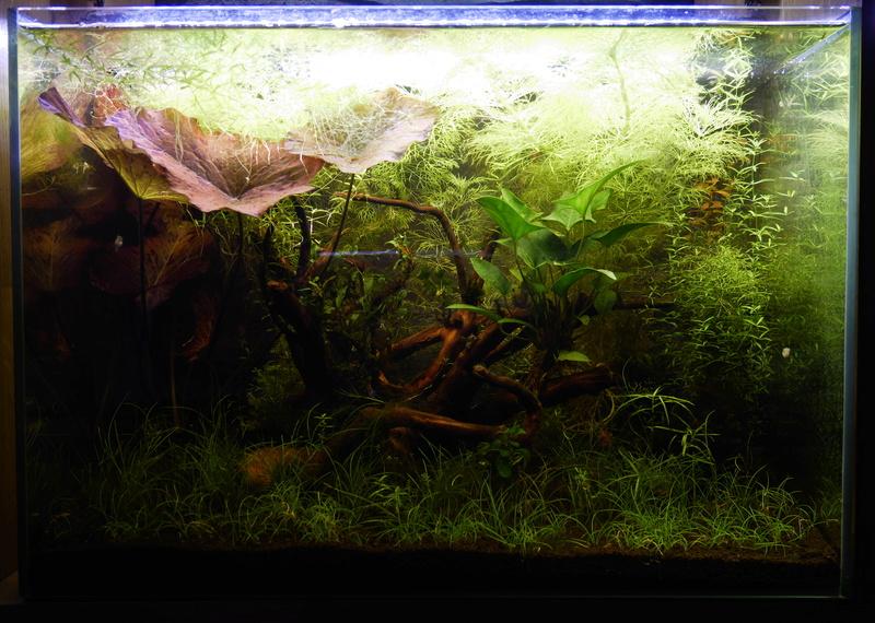 Montrez vos Aquariums P1000610