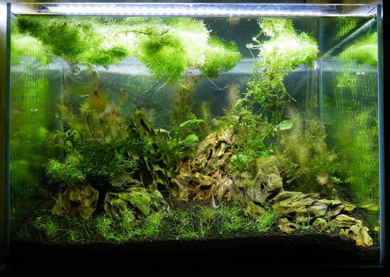 Montrez vos Aquariums P1000611