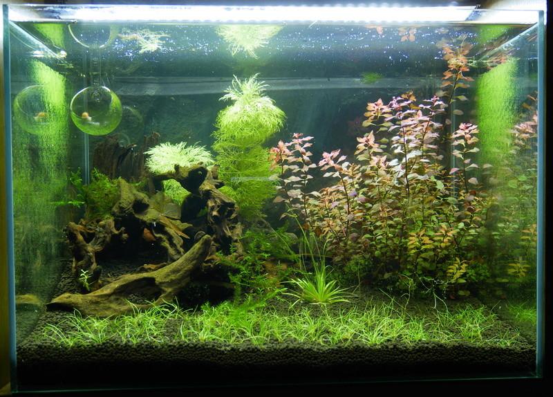 Montrez vos Aquariums P1000612