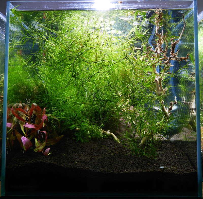 Montrez vos Aquariums P1000613
