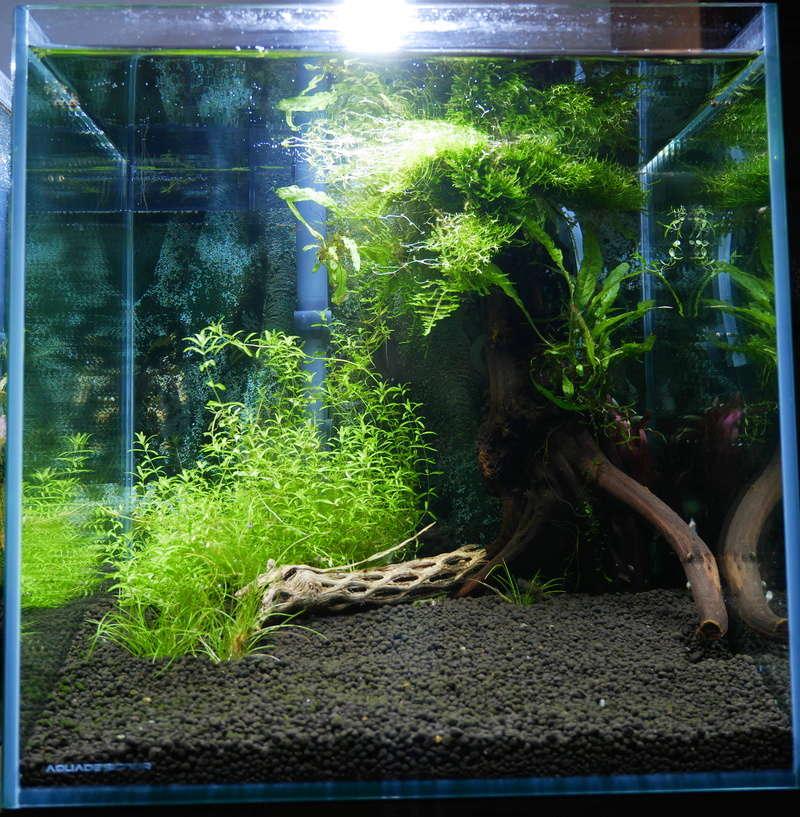 Aquarium boule cascade de Tetra (6,8L) P1000614