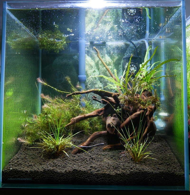 Montrez vos Aquariums P1000615