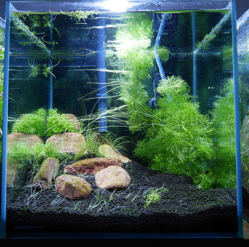Montrez vos Aquariums P1000616