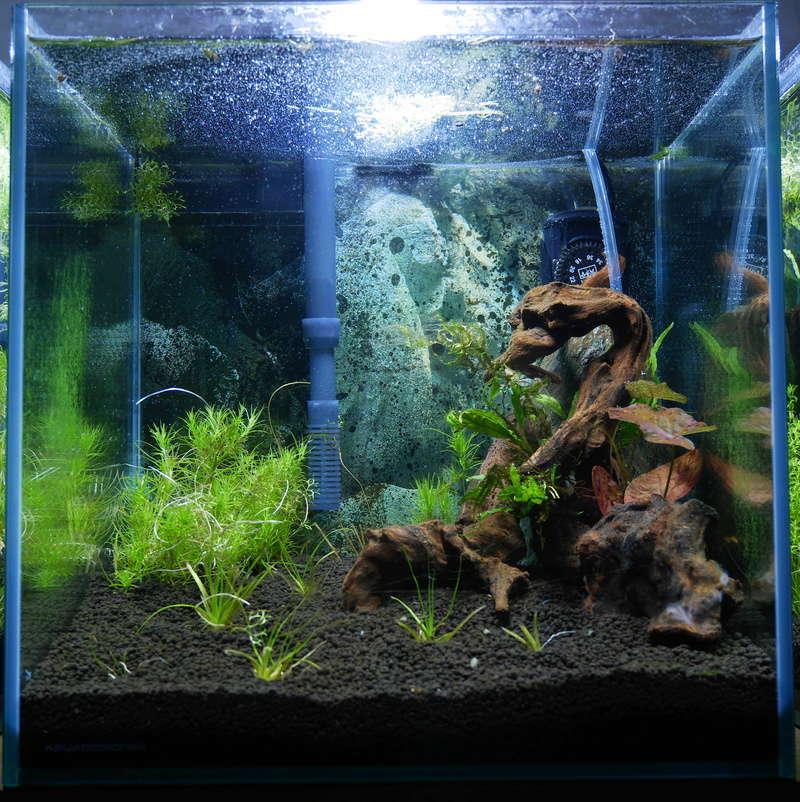Montrez vos Aquariums P1000617