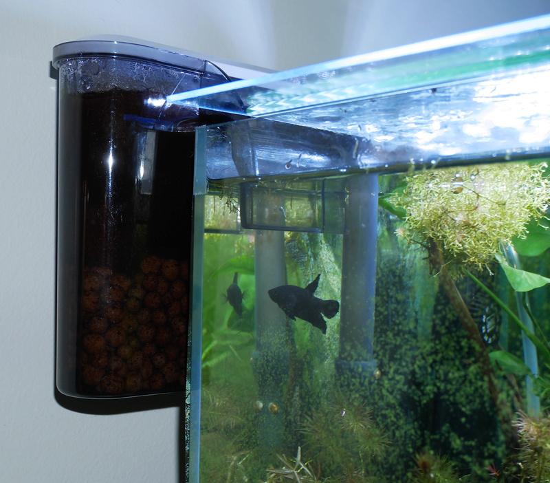 Besoin de conseil pour un nano aquarium 30 l P1000810