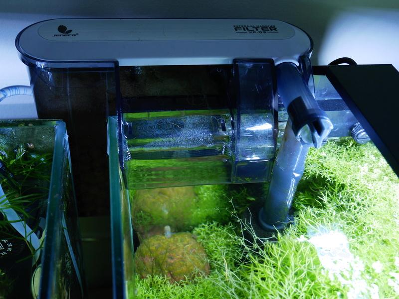Besoin de conseil pour un nano aquarium 30 l P1000811
