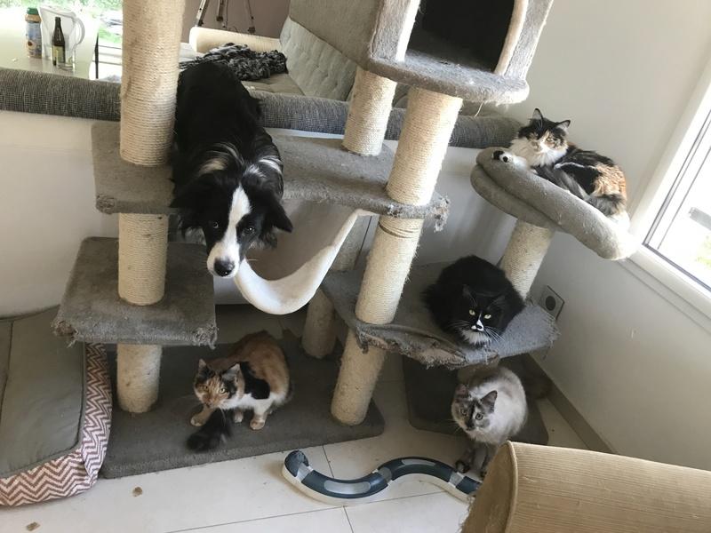 CARMEN - chat femelle, née environ septembre 2016 - PASCANI - adoptée par Sarah et Kevin (depart 57) 70a5ed10