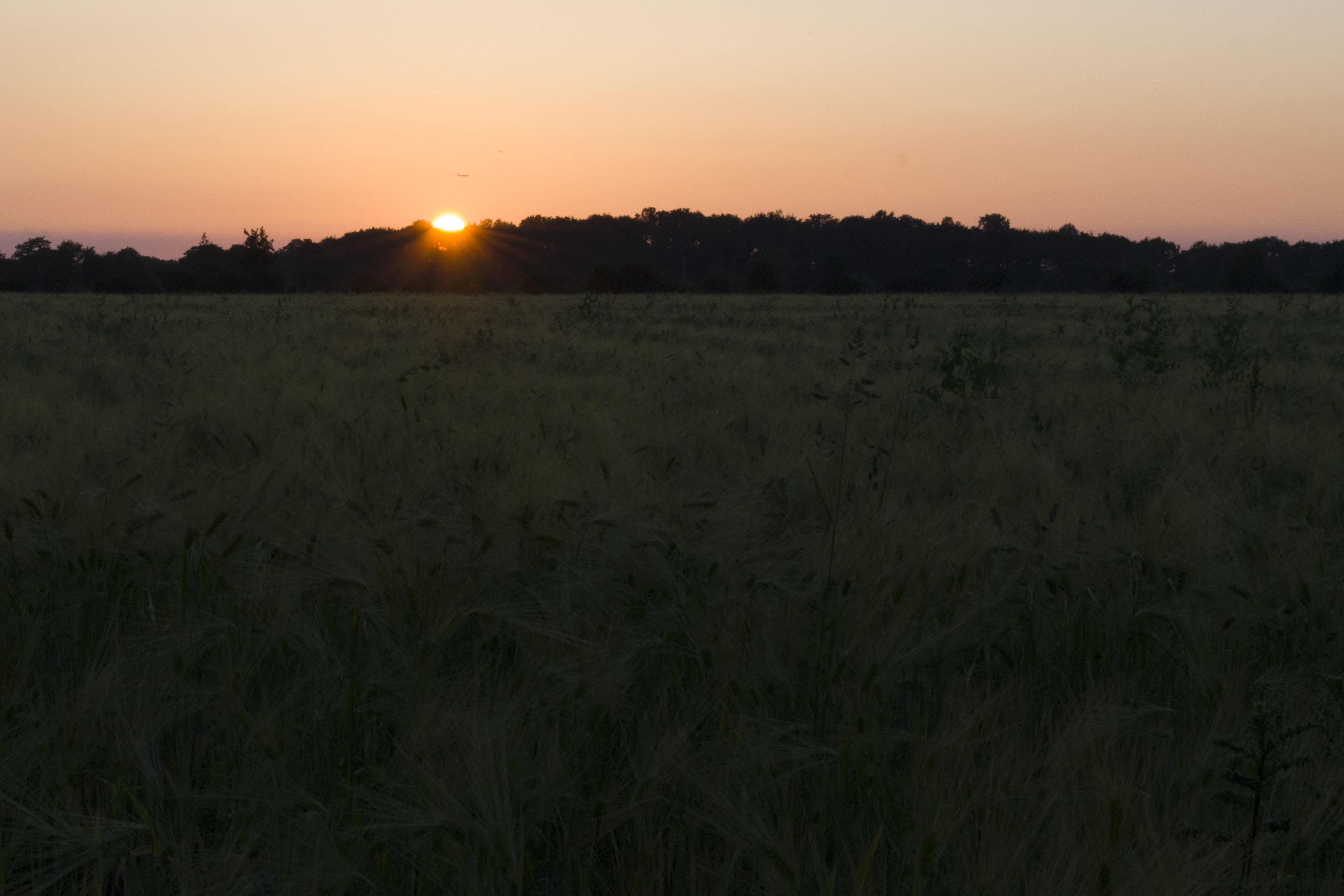 Le coucher de soleil sur... Epi_de14
