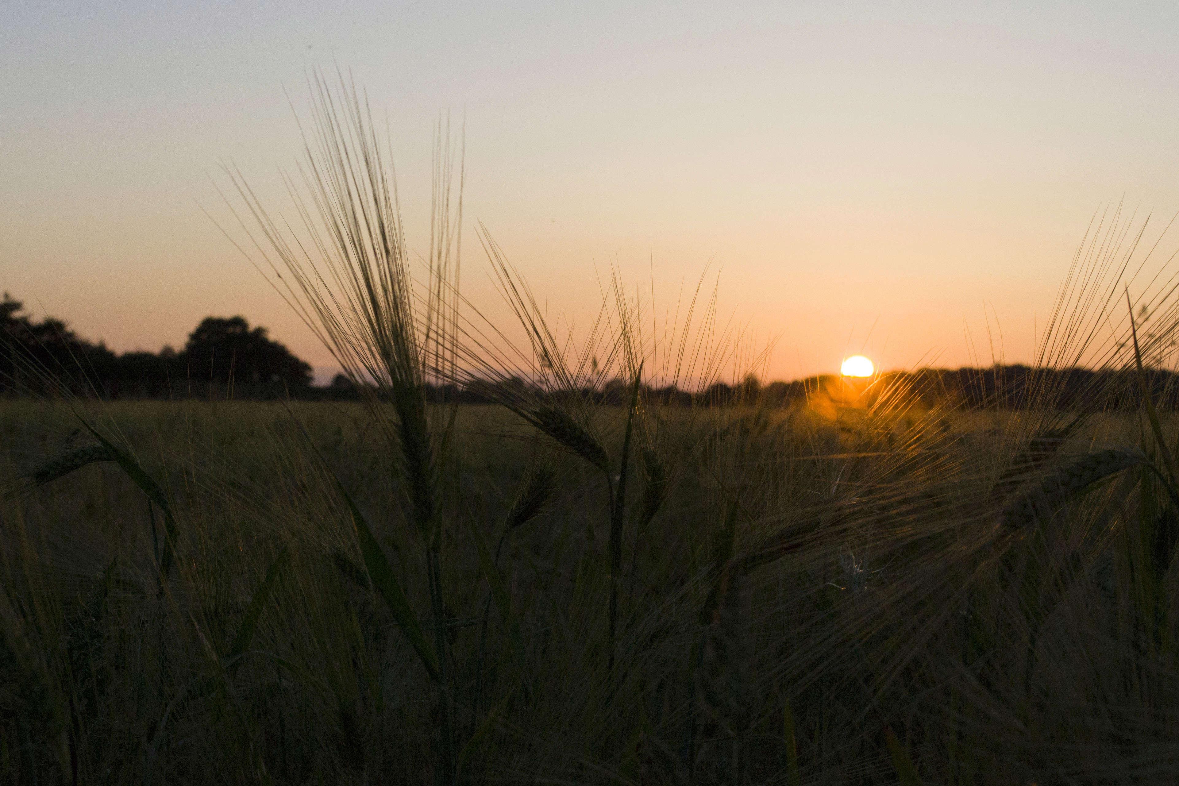 Le coucher de soleil sur... Epi_de17