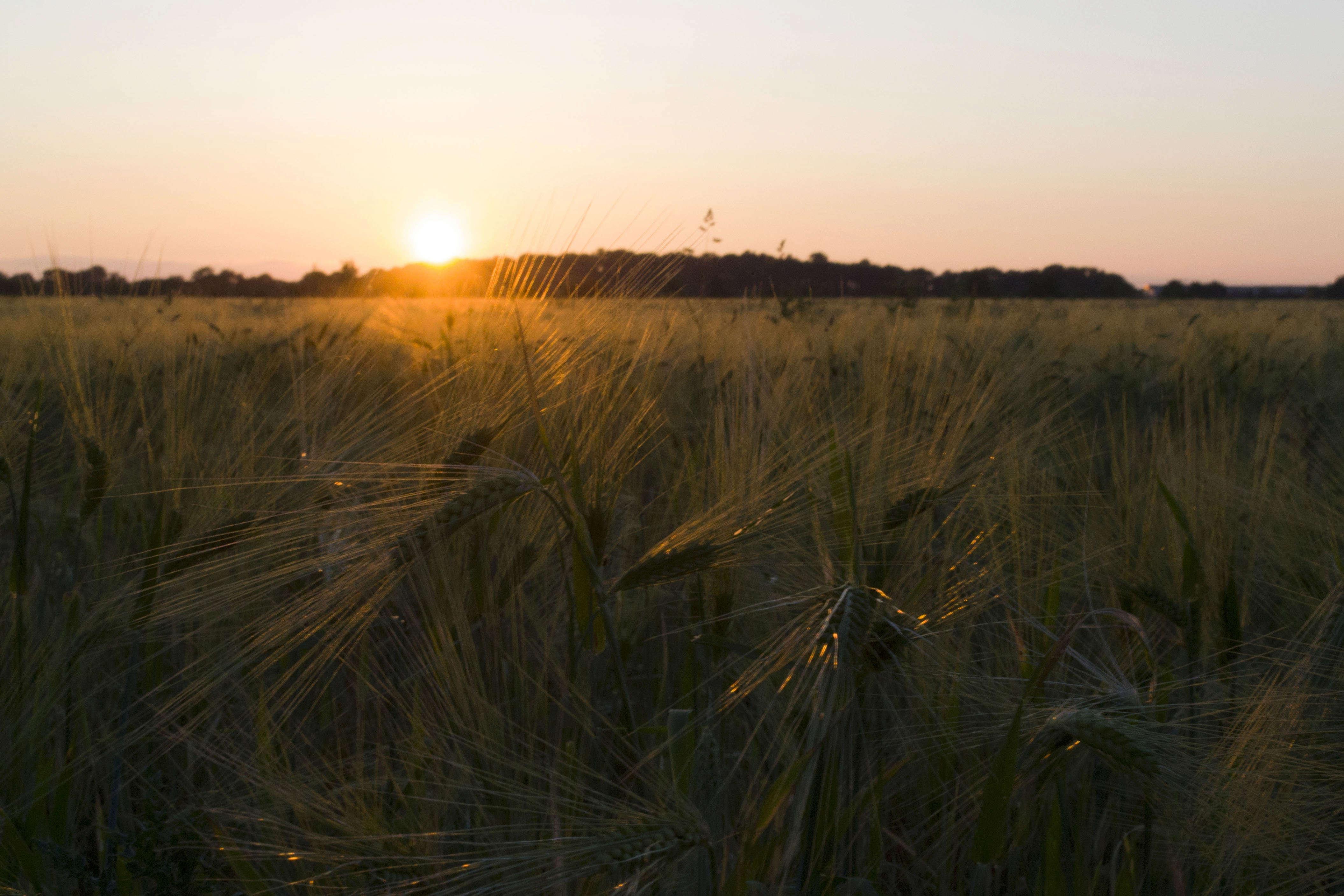 Le coucher de soleil sur... Epi_de19
