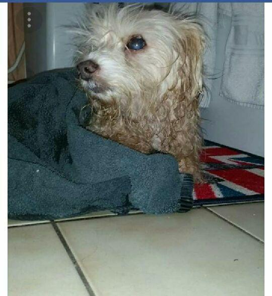 chien trouvé, état déplorable 27459410