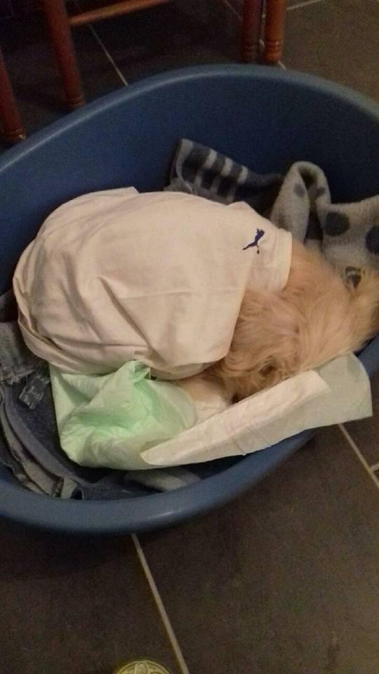 chien trouvé, état déplorable 27752510