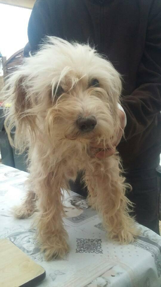 chien trouvé, état déplorable 27867410